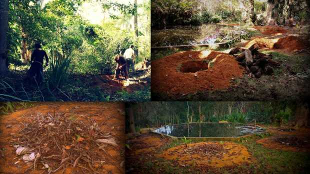 (left top) António digging with our lovely WWOOFers; (right top) banana circles dug out all around our pond to create a mandala; (left bottom) the banana circle water holes are covered; (right bottom) just six weeks later most bananas have sprouted