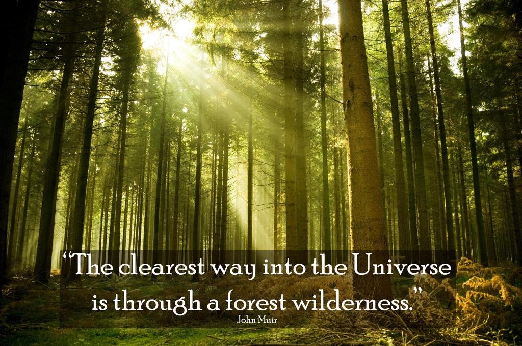 """John  Muir: """"The clearest way through the universe is through a forest wilderness."""""""