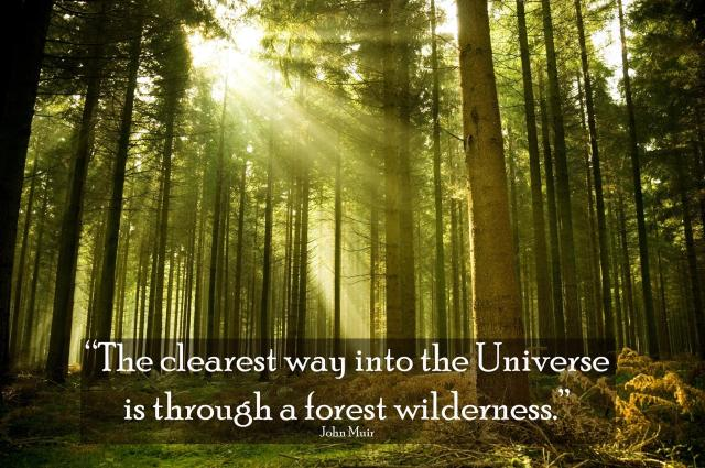 "John  Muir: ""The clearest way through the universe is through a forest wilderness."""