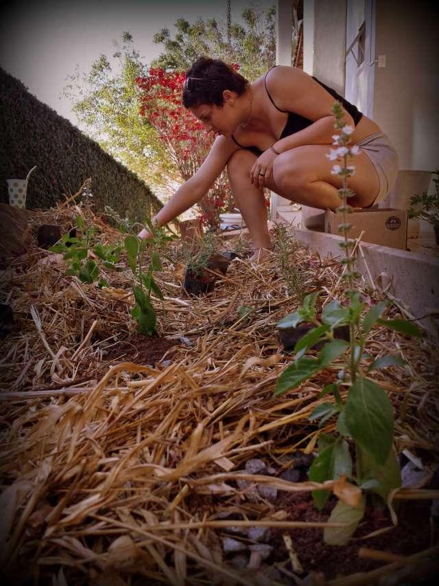 Planting Kitchen GardenHerbs