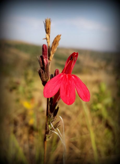 During the dry season many plants blossom here.